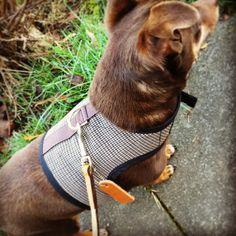 Sherlock Holmes houndstooth  Small Dog Harness by CustomDogJacket