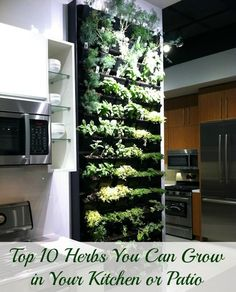 Top 10 Herbs You Can Grow in Your Kitchen or Patio