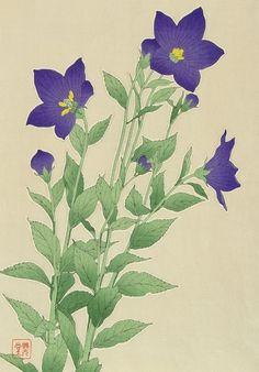 Shodo Kawarazaki 1889-1973 - Chinese Bell Flower - Kikyo (488x700, 249Kb)