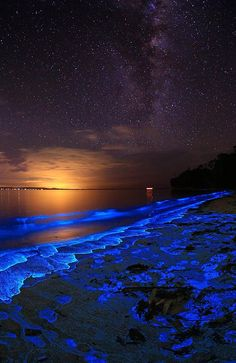 Footsteps in bioluminescent dinoflagellate (noctiluca scintillans), Jervis Bay, NSW, Australia | Joanne Paquette Photography