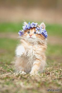 midsummer kitty , I'm ready for the festival mum, summer cat photo to make you…