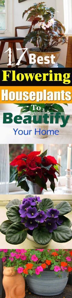 Check out this list of best flowering houseplants! They can add a bright touch to your home, growing them is similar to other indoor plants.