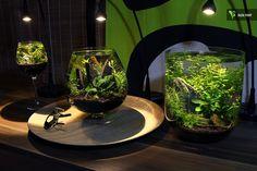 Gruppenfoto ;) Wini-Scape 0.5L, Stein-Jungle 3L, Mini_Scape 4L. Mini (rechts) hat jetzt eine Standzeit von ca. 3 Monaten. Es sind natürlich keine Fische oder Garnelen drin nur einige PHS Schnecken haben sich verirrt. #aquascaping #aquarium #oleg foht