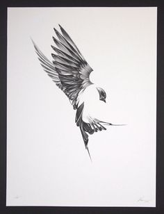 "Here's an absolutely stunning set of art prints from Von. Titled ""Flight"", and exploring the unique anatomy of birds tattoo?!"