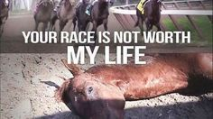 Petition · Everyone: Ban The Grand National and other horse racing · Change.org