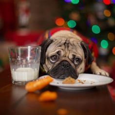 Tips To Get Your Picky Dog To Eat Their Food