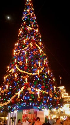 A closer view of that same magnificent tree in the Main St. square.