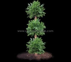 Cedar Topiary Ball - A beautiful option for the low-light areas.
