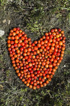 Love this berry heart! As the temperatures are falling with the onset of Monsoon (rainy season in India), we will be able to got out more often to create land art...So much looking forward to this weekend...!