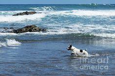 Little dog getting fun on beach by Anastasy Yarmolovich