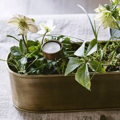 February garden tip: If you only have one hour to spare you should do this...  - housebeautiful.co.uk