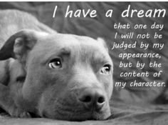 Pit Bulls are my favorite.  People have the wrong impression. Don't judge before you experience their love and compassion.