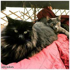 What is a friend? A single soul dwelling in two bodies. - Aristotle  #friendship #cats #lovethem #prettyeyes #cuddles #kitten #ilovemycat #catlady