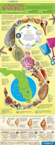 Collecting Seashells on Florida's Beaches