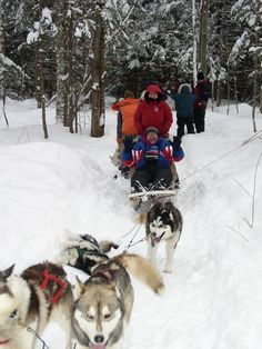 Dog sledding, Quebec, Canada