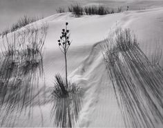 Ansel Adams / Dune, White Sands National Monument, New Mexico / c. 1942