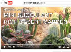 12 Reasons to Love Cactus from succulent author Debra Lee Baldwin Kinds Of Cactus, Planting Succulents, Succulent Plants, Water Lilies, Screen Shot, Container Gardening, Garden Design, Deserts, Cacti