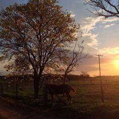 Belo entardecer na fazenda Dobrão, adornada por um ipê amarelo, em Três Lagoas, Mato Grosso do Sul, Brasil.  Fotografia: Elizeu Lima de Araújo.