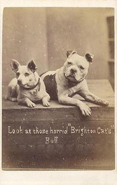 """""""Look at those horrid 'Brighton Cats', Bull"""". Two dogs take a dim view of their feline rivals in this carte-de-visite photograph by Harry Pointer of Bloomsbury Place, Brighton. (c1875)"""