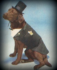 This Groom pet costume is made especially for your pup.   It is made with a Plain Black or Pin Striped Textiles, accented & lined with black satin or sateen & white cotton for the faux shirt front. The under belly front chest piece& underbelly have Velcro Closure for ease of wear and comfort. The font has 2 non functional Black buttons for decoration. You may include a color of pocket square and bow tie accent to your pets costume, Simply leave us a note in your order form or cont...