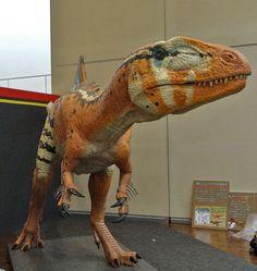 Concavenator corcovatus. Early Cretaceous. Spain