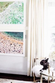 Gorgeous beach photography // Print Fan - 30 Pets That Stole The Show In Home Shoots - Photos