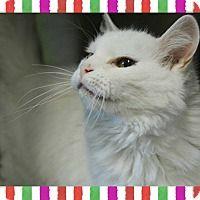 Adopt A Pet Ayla Bridgeport Ct With Images Kitten Adoption Pets Fur Kids