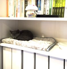 Cat bookshelves!? 10/21/2014
