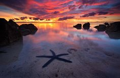 Starfish Sunset