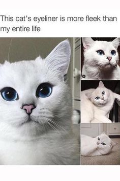 20 beauty memes that will make you laugh out loud… 20 Beauty Memes, die dich zum Lachen bringen … Memes Humor, Funny Animal Memes, Cute Funny Animals, Funny Animal Pictures, Funny Cute, Cute Cats, Funny Memes, Animal Humour, Dad Humor