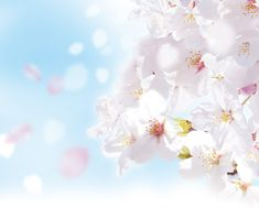 Best cherry blossom #fragrances #fragrantica