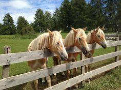 Horses, Animals, Pictures, Animales, Animaux, Animal, Animais, Horse