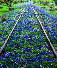 Look no further than beautiful Texas Hill Country. Check out our top reasons to visit Hill Country, Texas, right here, from wineries to waterfalls and much more. Visit Texas, Texas Bluebonnets, Train Pictures, Texas Travel, Texas Hill Country, Blue Bonnets, Train Tracks, Abandoned Places, Beautiful Landscapes