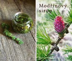 Udělejte si smrkové špičky s medem Korn, Health Advice, Natural Healing, Natural Remedies, Nature, Plants, Syrup, Natural Home Remedies, Naturaleza