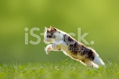 Young cat jumps over a meadow backlit - Stock image