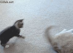 Today funny gifs (11:11:40 AM, Tuesday 20, December 2016 PST) – 30 gifs