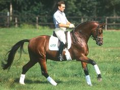 The Sport Horse Show and Breed Database - Aquilino