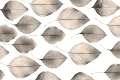 Leaves Group Photograph  - Leaves Group Fine Art Print