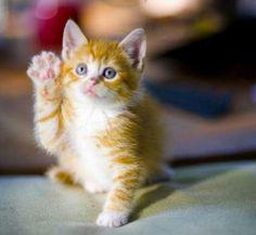 Hi precious. . .