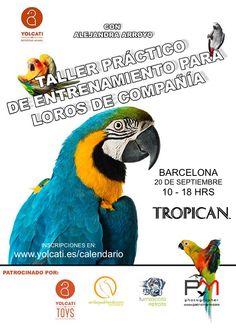 ¡NUEVO CURSO BCN! Taller páctico de entrenamiento animal aplicado a loros de compañía. Yolcati