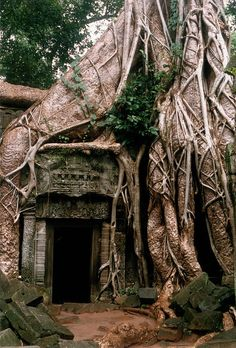 A Magickal Portal at Ta Prohm Temple, Angkor, Cambodia Angkor Wat, Doorway, Abandoned Places, Architecture, Places To See, Nature, Beautiful Places, Scenery, Around The Worlds