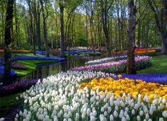 Amsterdam's Keukenhof Gardens