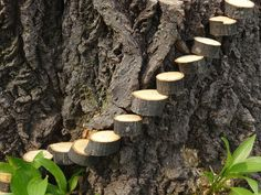 Clever idea from my husband: Steps to tree stump fairy garden made from tree limb coins/wedges, with a nail hammered into side, nail head cut off, then hammered into side of tree stump.