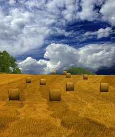 Fields of Gold, Hungary
