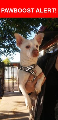 Is this your lost pet? Found in Tucson, AZ 85716. Please spread the word so we can find the owner!  Chihuahua (?) mix, light coat, reflective harness.  Nearest Address: Near E Bermuda St & N Palo Verde Ave