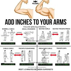 "8,129 Likes, 56 Comments - MuscleMorph® (@musclemorph_) on Instagram: ""ADD INCHES to your arms with this superset workout LIKE/SAVE IT if you found this useful. FOLLOW…"""