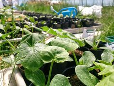 Seedling #farm