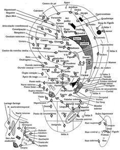 Medicina Milenar: Protocolos de Auriculoterapia.
