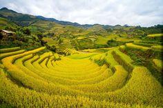 Geometría amarilla: campos de colza en China. | Matemolivares