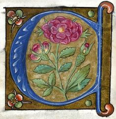 """""""C"""" letter (f°9v) -- Alphabet Book, by French Artist, Paris (France), ca1550 [Walters W.200]"""